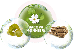 Thành phần từ thảo dược cùng tinh chất cao Bacopa an toàn, lành tính