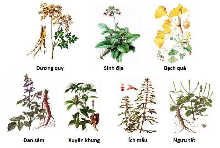 Một số thành phần thảo dược trong Hoạt huyết dưỡng não.