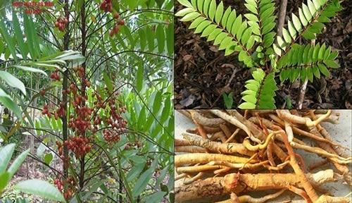 5 cây thuốc quý dễ trồng trong vườn nhà
