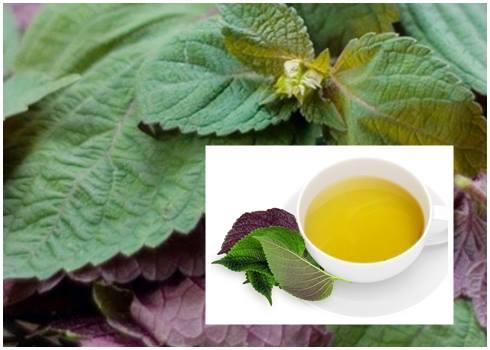 Nước tía tô có tác dụng thanh nhiệt, giải độc tố, bồi bổ và tăng cường sức khỏe