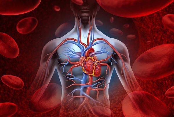 Tổng hợp các bài tập dành cho người lưu thông máu kém - Hoạt huyết ...