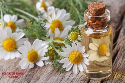 Tinh dầu hoa cúc la mã trong làm đẹp