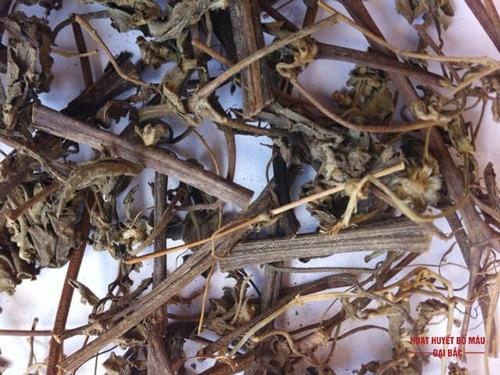 Tác dụng của cây hy thiêm dược liệu