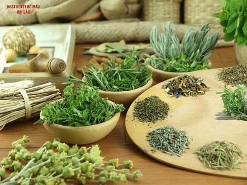 Những cây thuốc quý hiểm ở Việt Nam