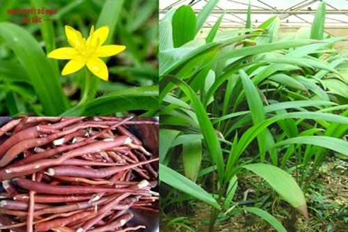 Những cây thuốc quý trong rừng